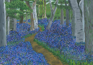 2015 Bluebell Wood